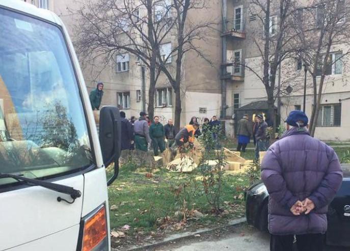 ФОТО: Ќе ги гушка ли некој овие дрва? Или ова се дрва терористи