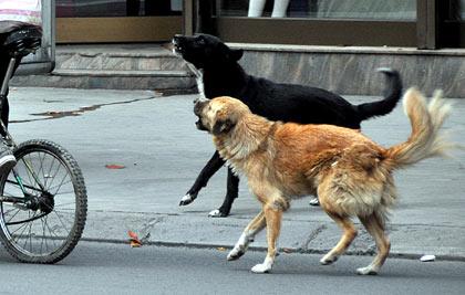 Двајца скопјани каснати од кучиња скитници