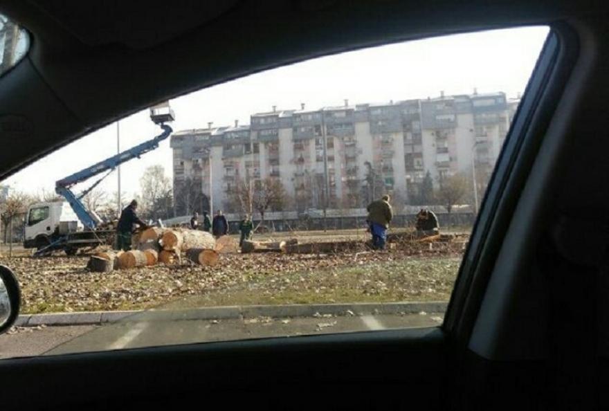 Жителите на Аеродром револтирани од Марин: Дојде живот- некои садеа 50.000 садници, други ги сечат
