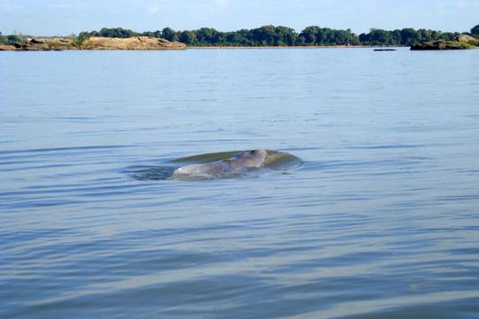 Во Црното Море има се помалку делфини и се повеќе смет