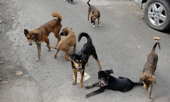 Кучиња искасаа девојка во Градски парк