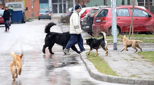 Малолетник искасапен од куче на нивниот сосед