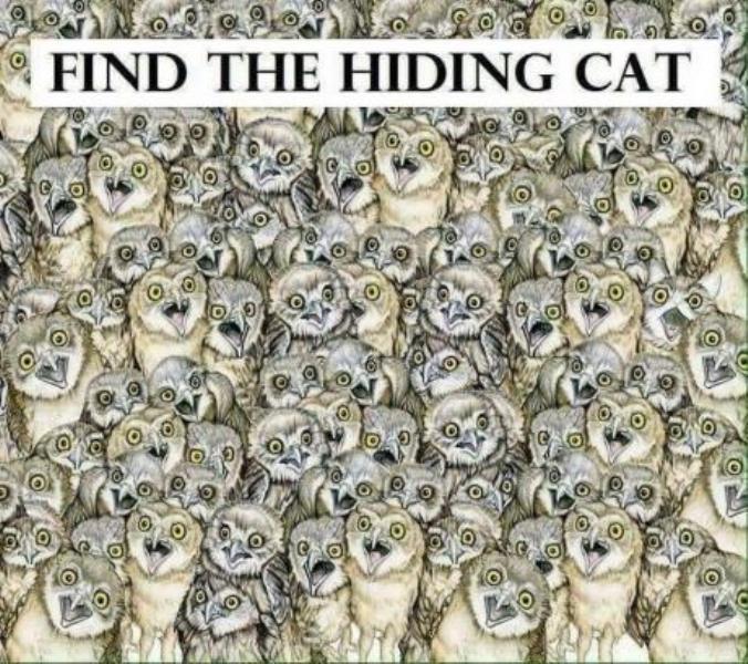 Пронајдете ја мачката- потешко е од што мислите (ФОТО)