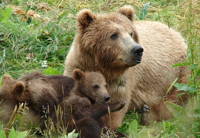 700 пресуди против мечки, Македонија треба да плати 3 милиони евра