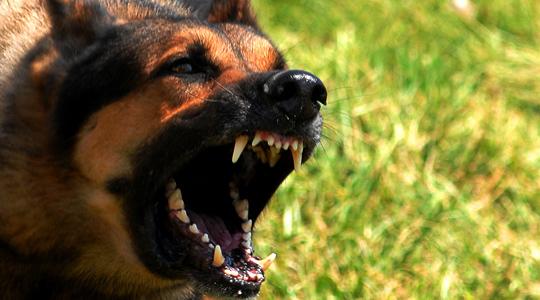 Маж нападнат од куче во Аеродром