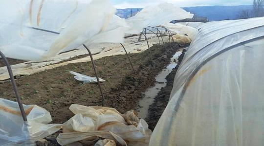 Силниот ветар во Струмица искина пластеници и откорна дрвја