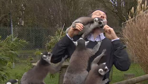 Ова не го очекуваше: Новинар среде снимање го нападнаа животни, му скокаа од сите страни (ВИДЕО)