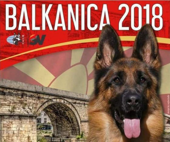 Изложба за расата германски овчарво Скопје