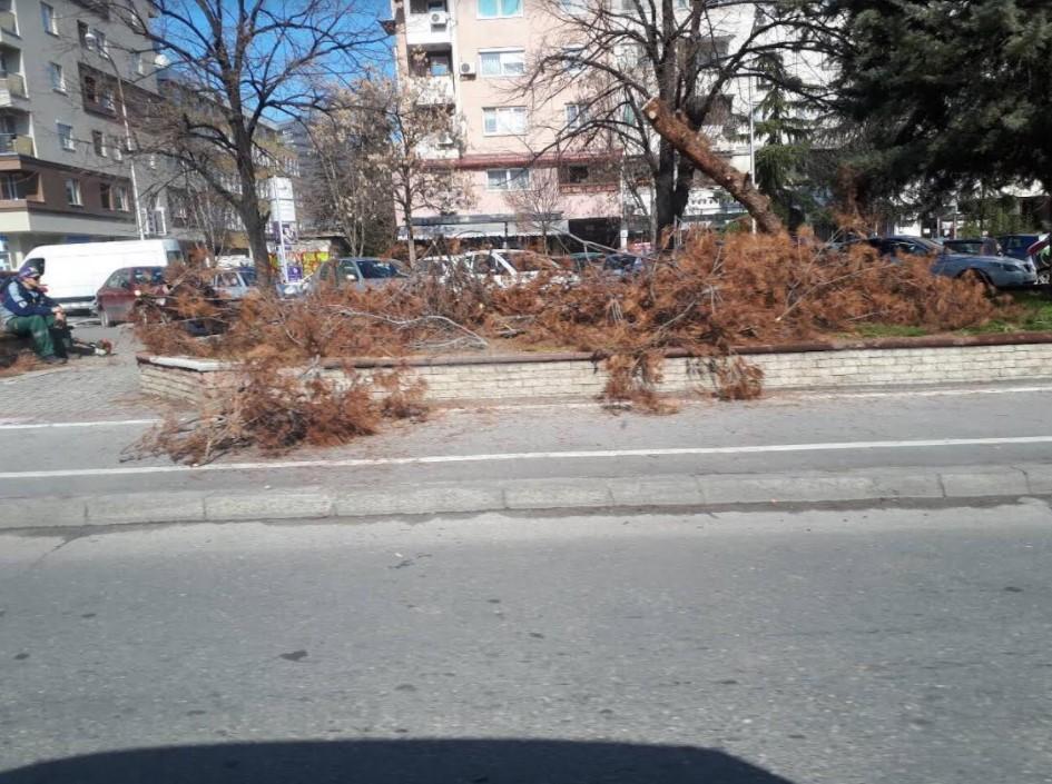 Богоев уништува огромни зелени површини – Исечени 30 дрва во Карпош, невладините молчат