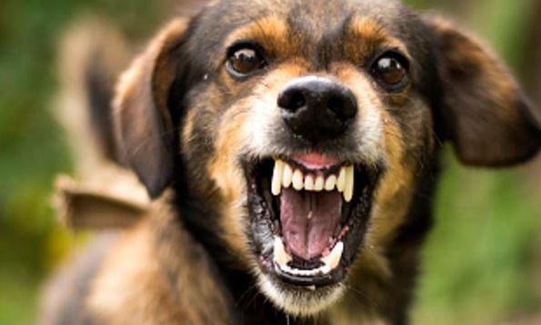 Три скопјанки нападнати од кучиња скитници