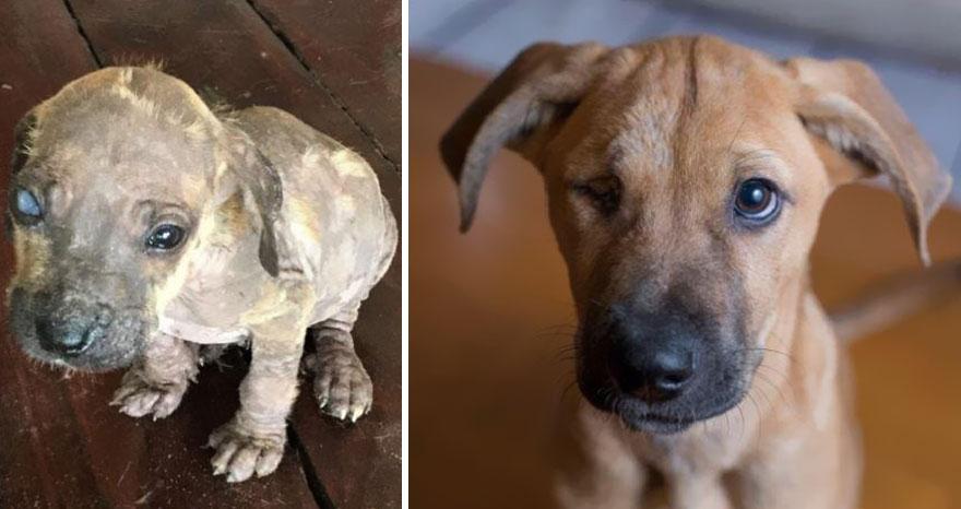 Биле пред умирање, а денес се среќни миленици: Фотографии од кучиња пред и по посвојувањето