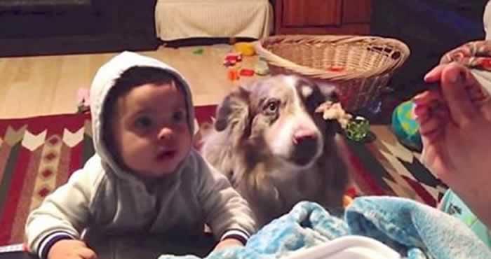 Зошто детето треба да расте со куче? Еве 4 причини поради кои веднаш ќе посакате да имате домашно милениче