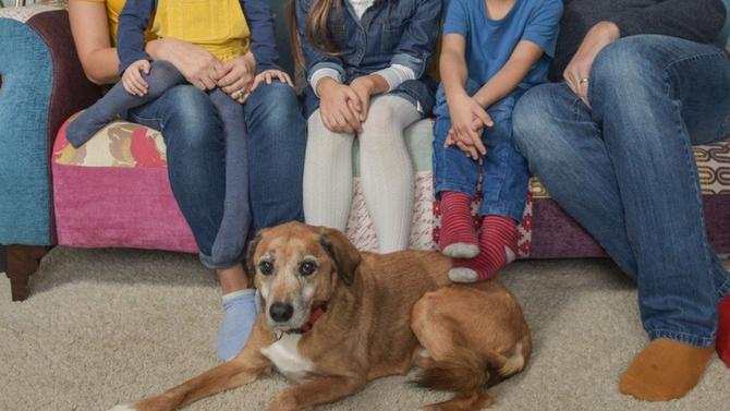 ФОТО: Дали е ова најубавото семејство на светот? Сите се модели, дури и кучето им е манекен