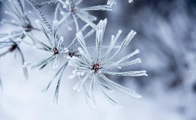 Утрински температури под нулата, во Берово минус седум