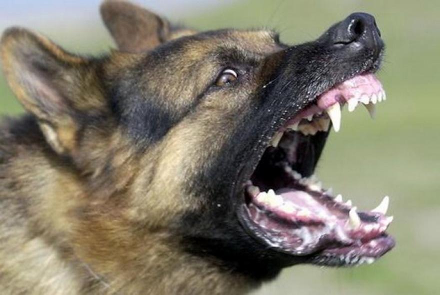 5-годишно дете каснато од куче скитник во Бутел