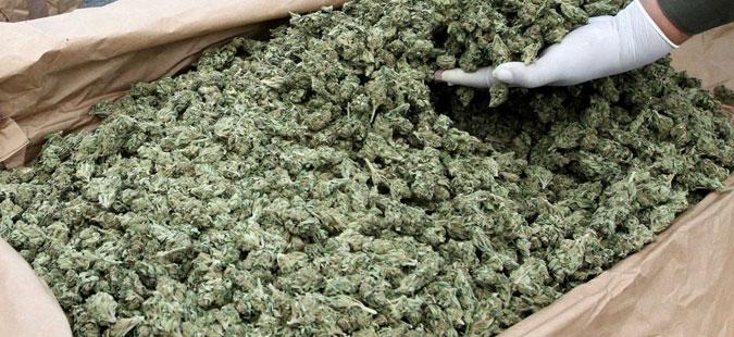 Конфискувана марихуана вредна 15 милиони евра