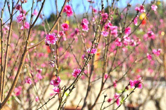Хит фотографија на социјалните мрежи најдобро го опишува доаѓањето на пролетта
