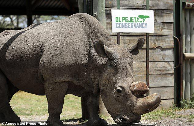 ФОТО: Почина Судан, последниот бел носорог