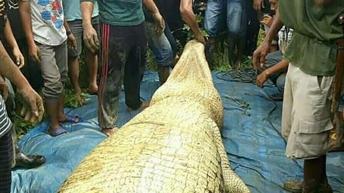 Мачна и грозна глетка: Убија голем крокодил, а ги згрози тоа што го најдоа во неговиот стомак (ФОТО)