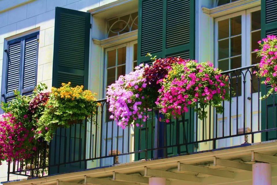 За вашите балкони да бидат шарени цело лето – додадете го ова во цвеќето и без прекин ќе цвета