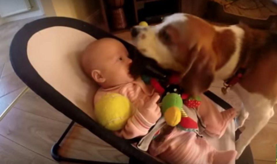 Куче расплака бебе па сакаше да се извини: И ја зема играчката, а потоа го направи ова- неговото извинување стана хит (ВИДЕО)