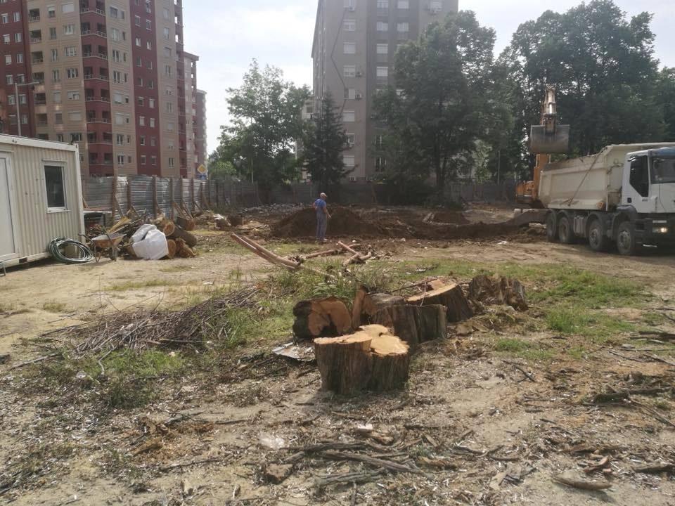 Жугиќ: Големи, здрави, повеќедецениски дрва, наместо да ги дислоцираат, ги решија по кратка постапка
