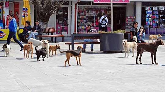 Три нови случаи на напади на кучиња врз скопјани