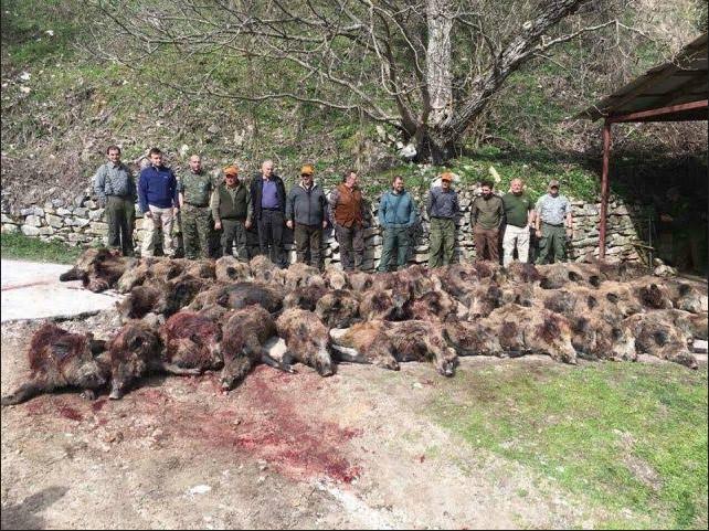 Нацев: Зошто ако имало санитарен лов, отстрелани биле трофејни животни? ОЈО да преземе мерки