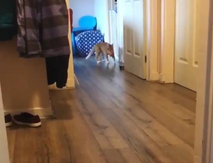 ВИДЕО: Оваа мачка се однесува како вистинско куче