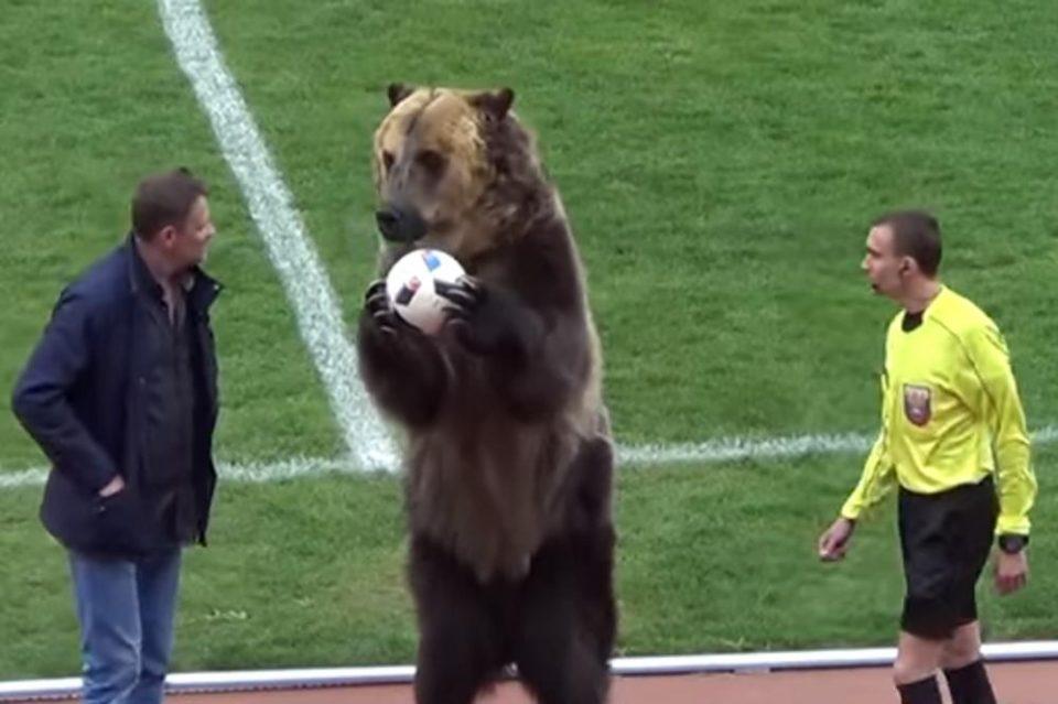 ВИДЕО: Мечка означи старт на фудбалски меч во Русија подавајќи му ја топката на судијата