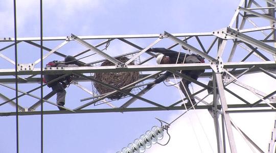 Во штипскиот регион се поставуваат гнезда за царскиот орел