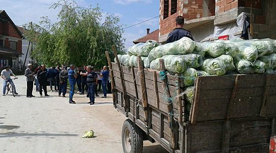 Производителите на пролетна зелка повторно на протест- бараат зелката да се откупува за 10 денари килограм