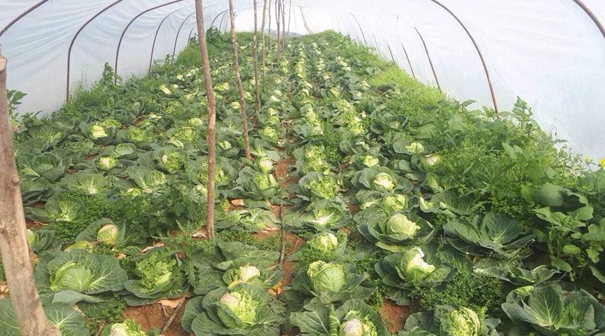 Зелките скапуваат, а министерот Николовски нема слух за маките на земјоделците