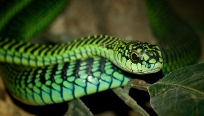 Природата жестоко му го возврати ударот: Уринирал на ливада, па змија му го каснала пенисот