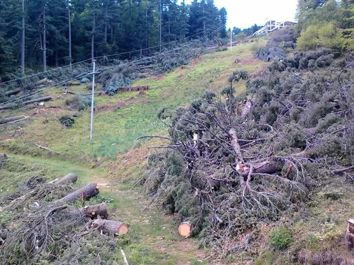 ФОТО: Голем број дрвја исечени на Баба планина, битолчани бараат коментар од владејачката ДОМ