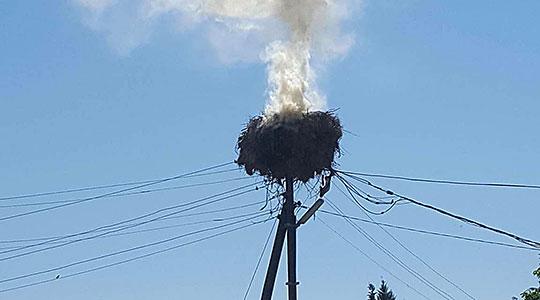 Трагедија во кавадаречко: Гнездо на штркови со пет мали штркчиња изгоре во пожар (ФОТО)