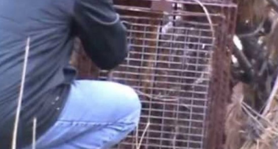 Поставил стапица за животни во шума: Кога ја отвори вратата имаше што да види (ВИДЕО)