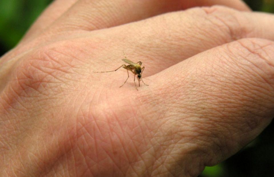 Комарците најмногу ги касаат овие четири групи на луѓе: Ако сте меѓу нив, тешко вас