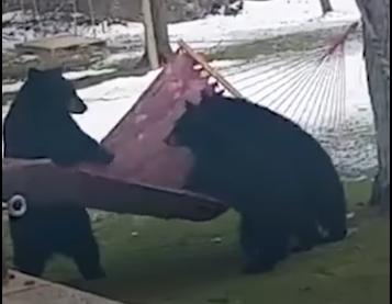 ВИДЕО: Што се може да ви се случи кога диво животно ќе ви дојде во двор?