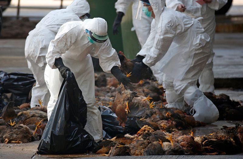 Птичји грип откриен на фарми во Полска