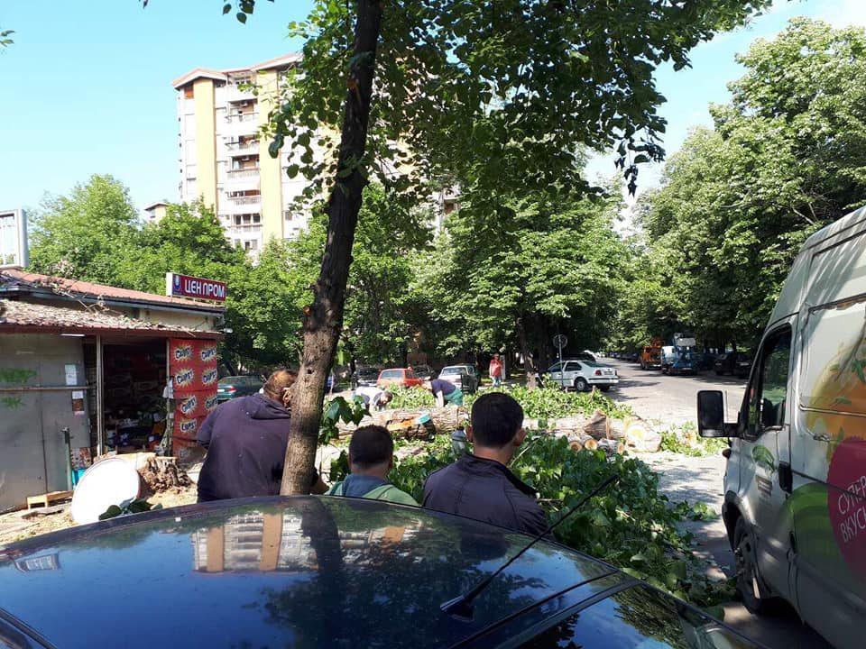 Богоев ветуваше подобра животна средина, а во Карпош се пустошат цели паркови со дрва (ФОТО)