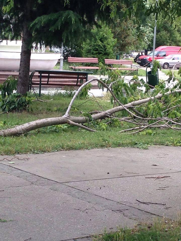 ФОТО: Откорнатите дрвја во Аеродром се уште на улица и по парковите