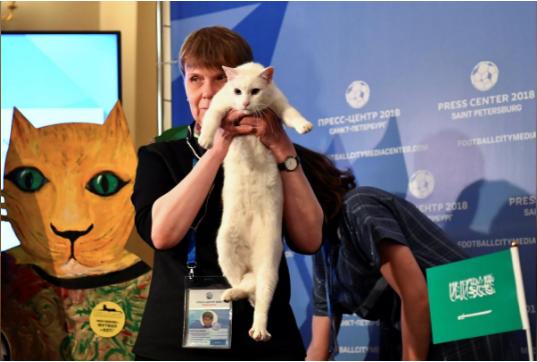 Мачорот Ахил предвиде: Кој ќе биде победникот во првиот натпревар на СП? (ВИДЕО)