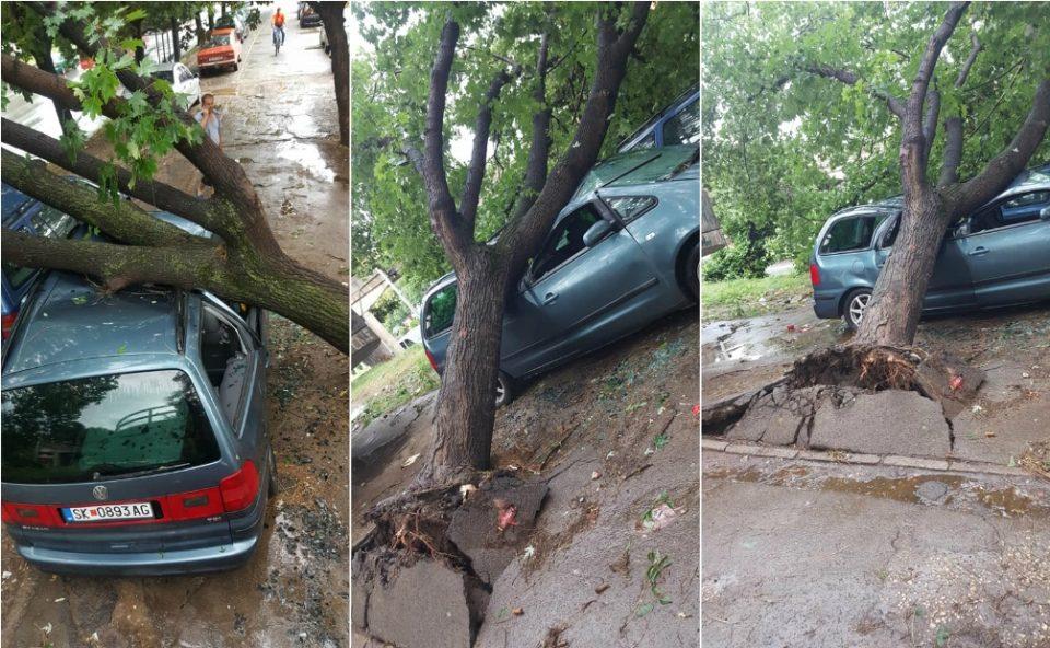 Невремето во Скопје остави огромни последици: Дрво уништи автомобил во Чаир (ФОТО ГАЛЕРИЈА)