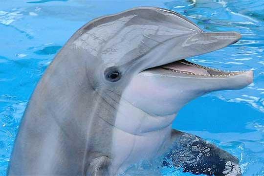 ВИДЕО: Снимено раѓање на делфинче во базен на отворено во Одеса