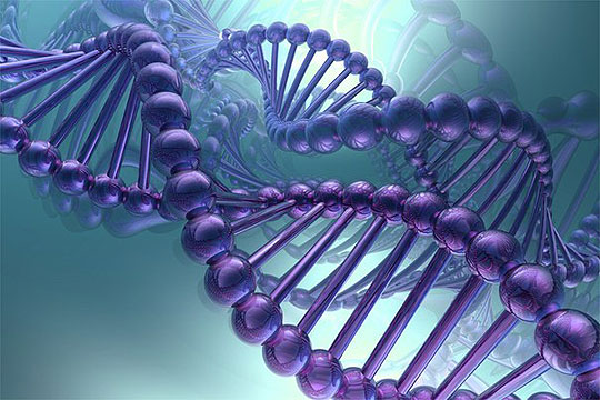 Идентификувани 1.016 гени поврзани со интелектот кај човекот