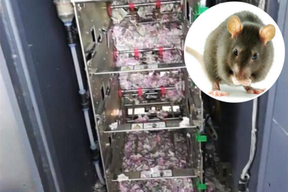 Глушец влегол во банкомат и изџвакал вистинско богатство, кога ќе ја видите сумата нема да ви биде добро (ВИДЕО)