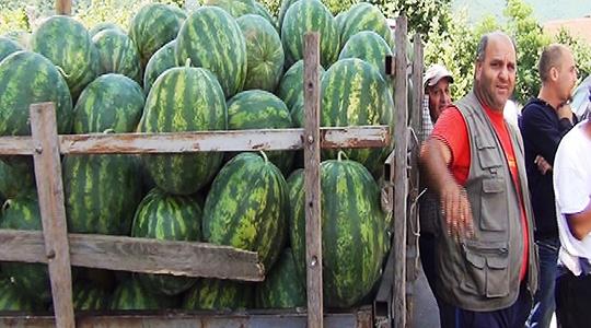 Запре откупот на лубениците во струмичко