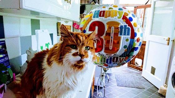 ФОТО: Најстариот мачор во светот го прослави 30. роденден