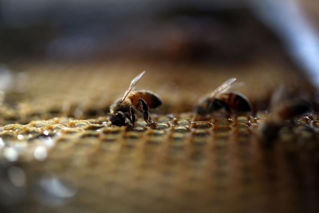 Неверојатно откритие: Пчелите го сфаќаат она што децата не можат